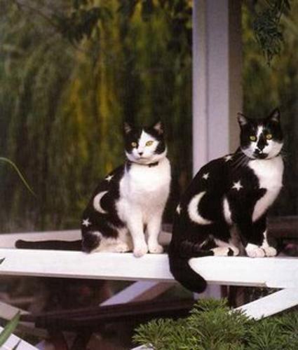 paintedcat