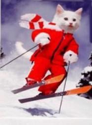 ski-186x252-custom