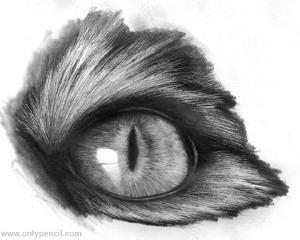 eyefinal