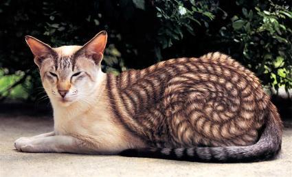 shellcat