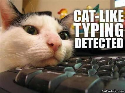 cattyping