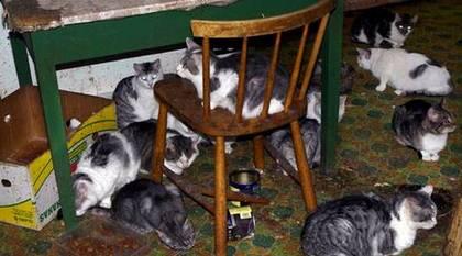 Vanvårdade katter i helvetet – Wikipedia
