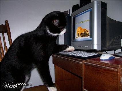 cat_porno