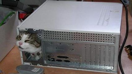 computercatstelain