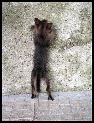 byevyandcats5