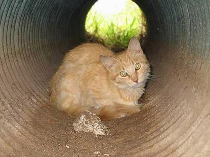 cat_in_drainpipe