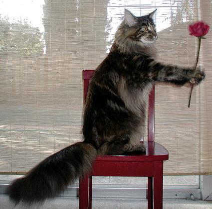 flowercat_lulu1