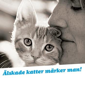katt_mrk
