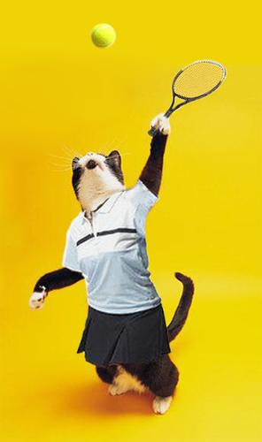katt_tennis