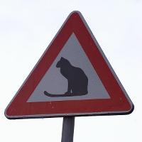 varningkatterx