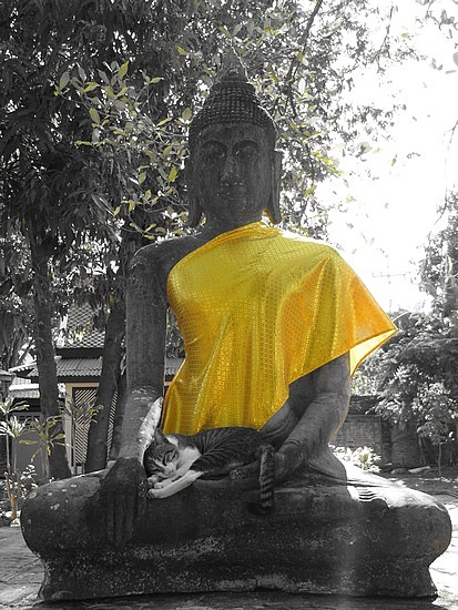 ayutthayabuddhaandcat