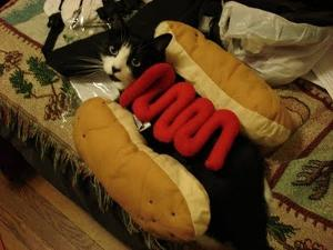 pele_the_gato_as_a_hot_dog