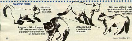 svans11