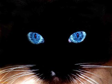 blackcatblueeyes2
