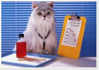 doktor_katt1