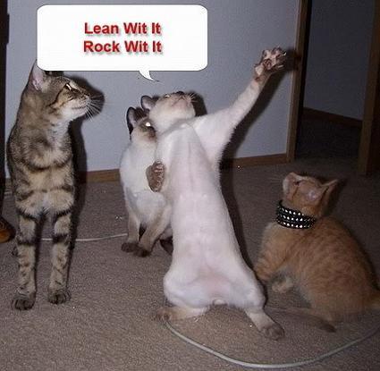 funnydancingcats