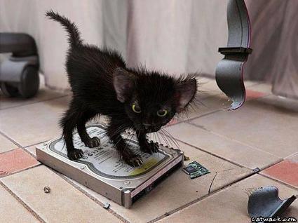 harddiskcat
