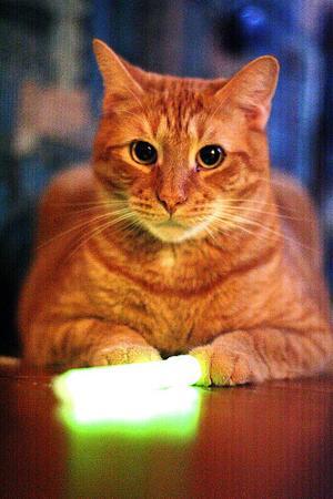 katt_glow