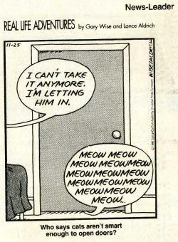 cartooncatsopendoors