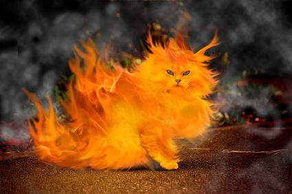 firekitty