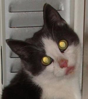 katt_mun