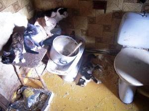 djurskyddmalungslen
