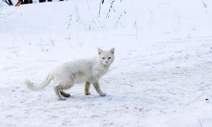 winter_cat