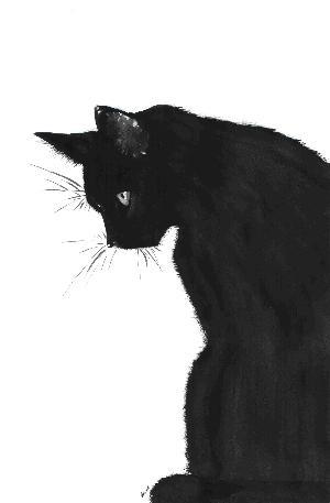 blackcatbymidniterain
