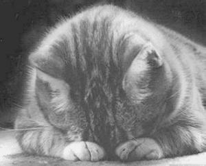 crying_cat