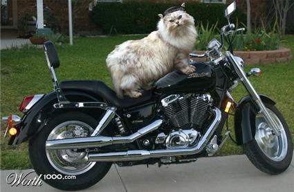 bikecat