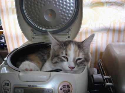 catincd