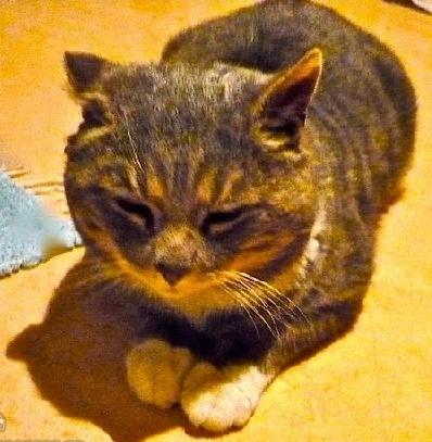 kattennallebehveretthemcbcbd1