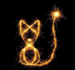 catandfireworks