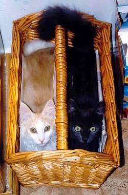 kattungartidningskorg