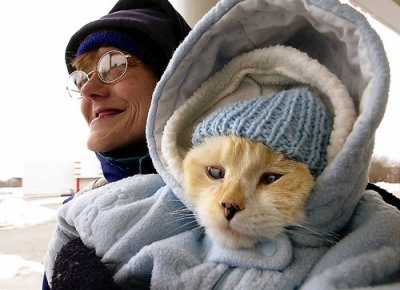 catclothing