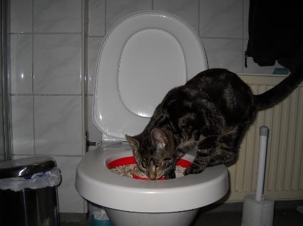 kattenptoa1