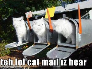 mailcats