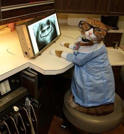cat_dentist