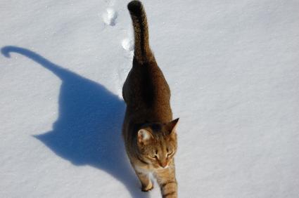 snowalker_
