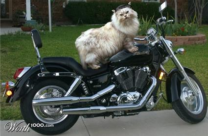 bikecat1