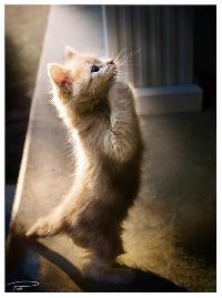 prayingkaguraptiibyphotocap2