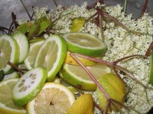 citronfladermellan