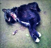 deadcat3