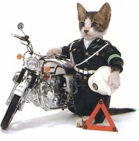 Police-Cat