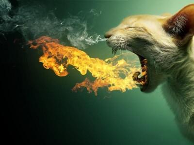 firecat