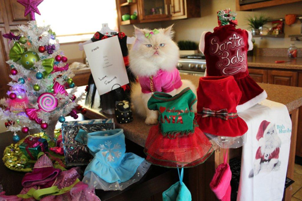 Luna-the-fashion-kitty
