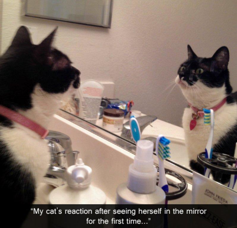 mirror (3)