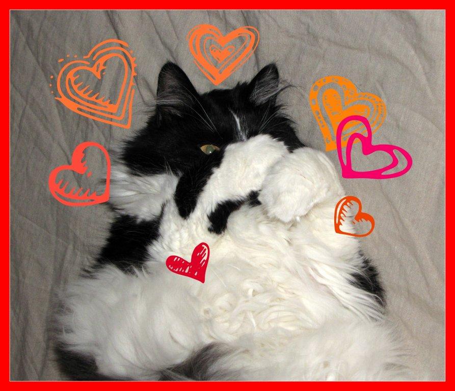 Wikki Love