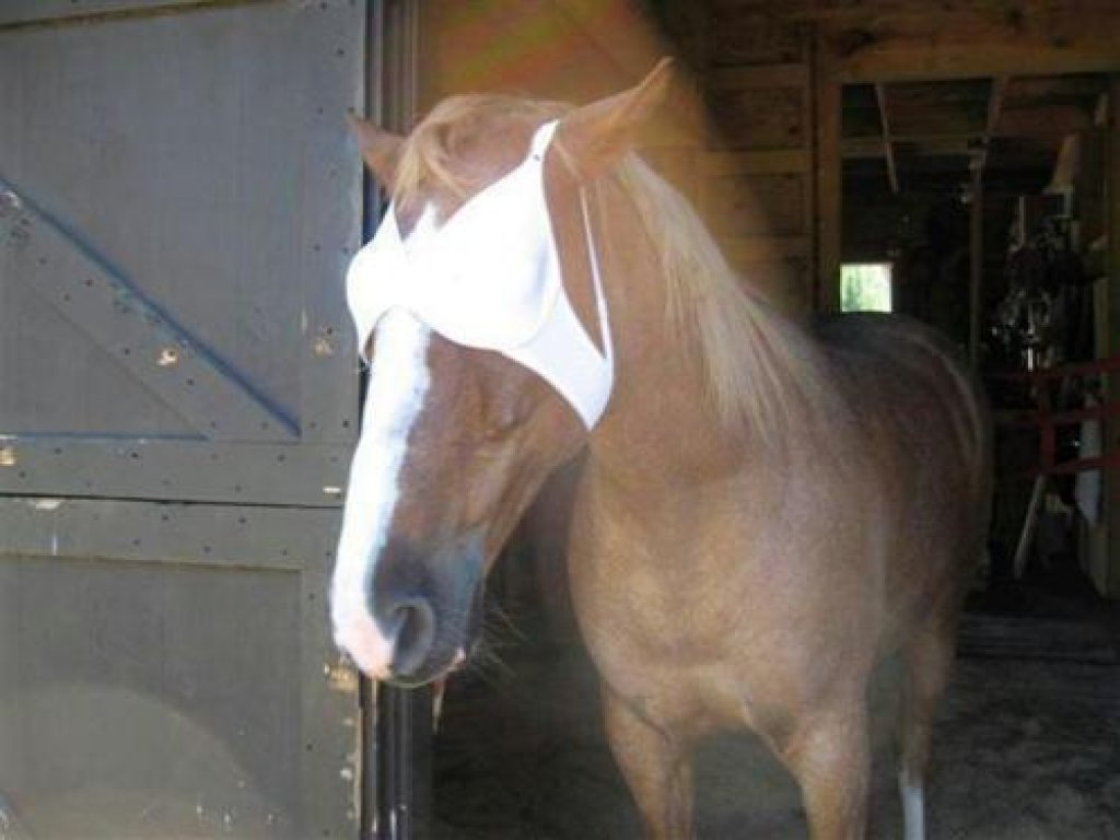 bh häst