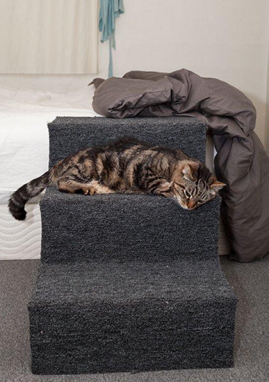 otis-on-bed-stairs-081213-2